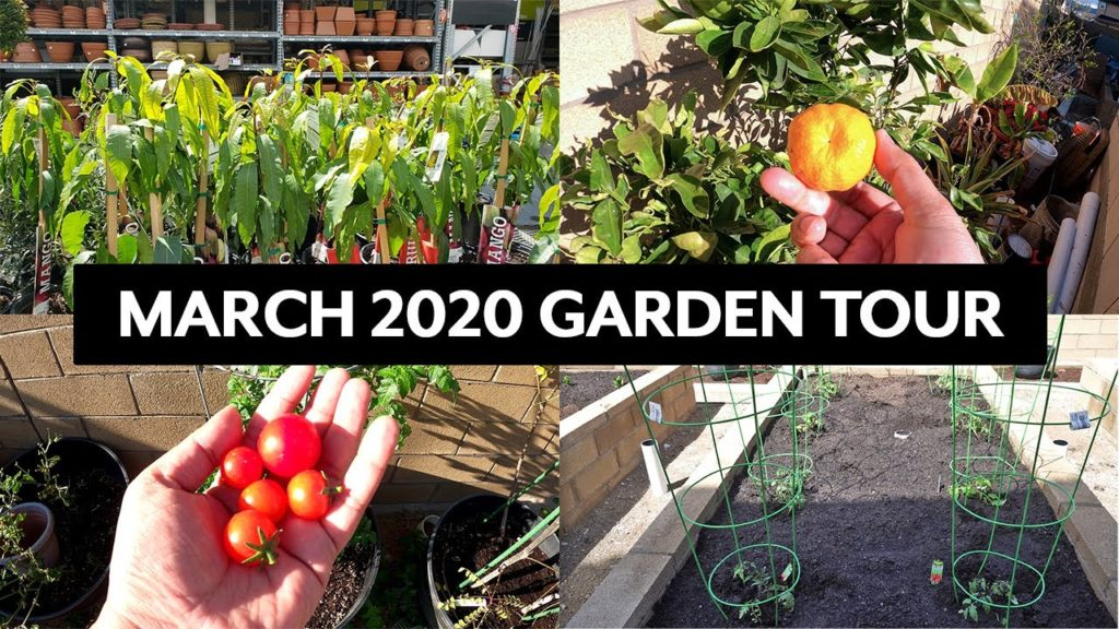 March 2020 Garden Tour of the California Garden - Harvests, Garden Tips & more!