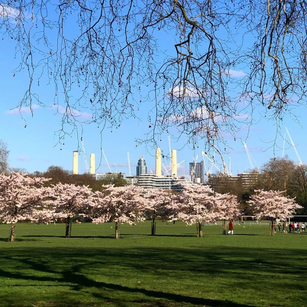 Out and about in Battersea Park and it all looks so beautiful and normal and Spr...