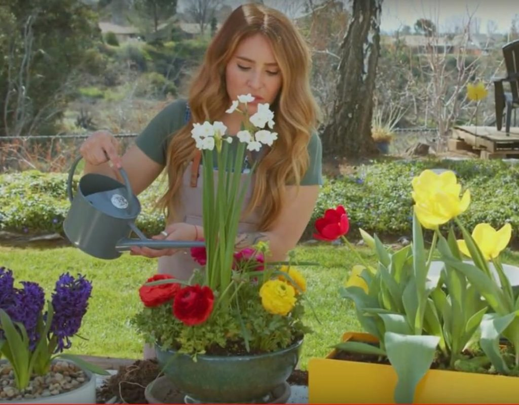 Planting spring flowers in containers is a great way to add some color to your c...