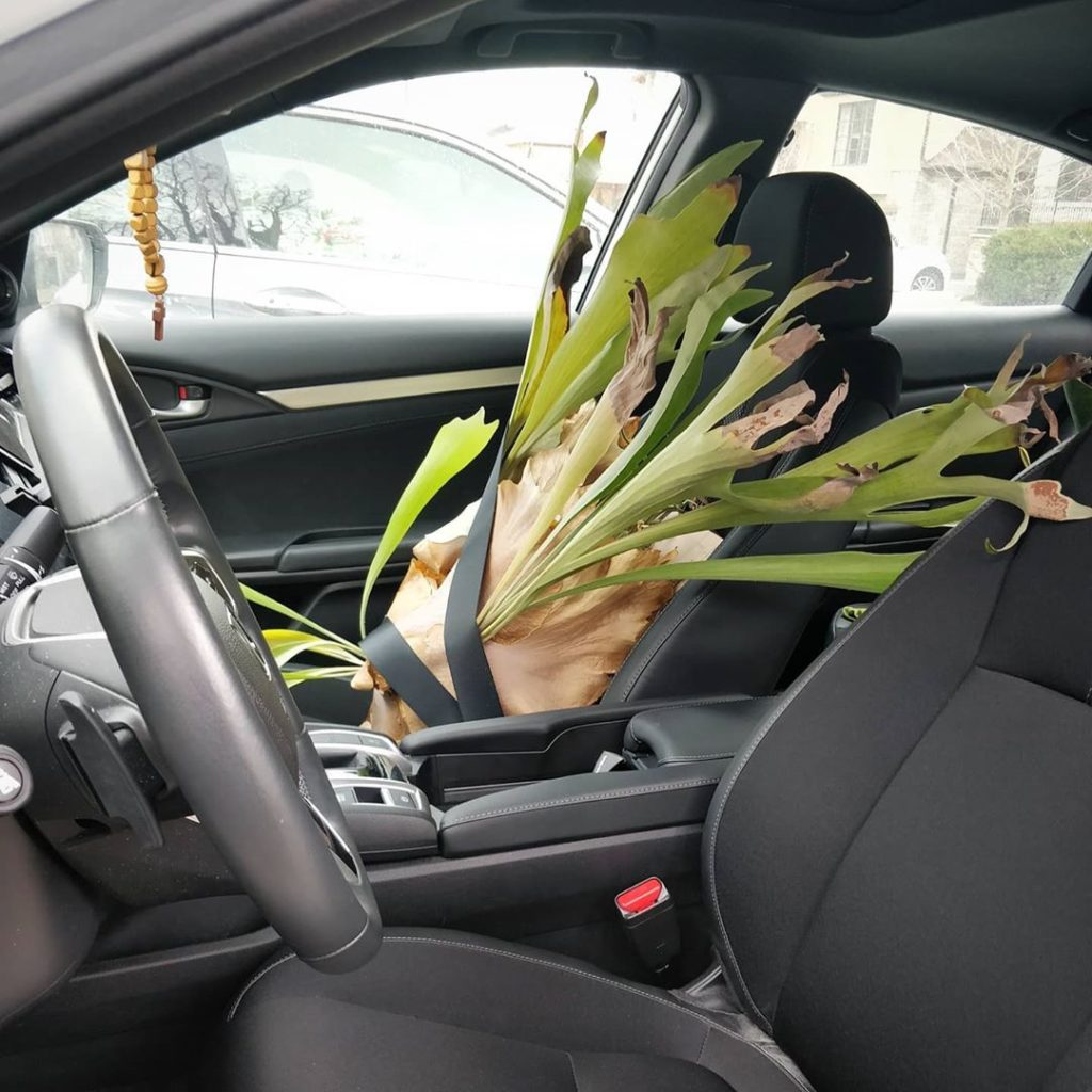 In an effort to stay locked down, I decided to bring my staghorn fern home. I co...
