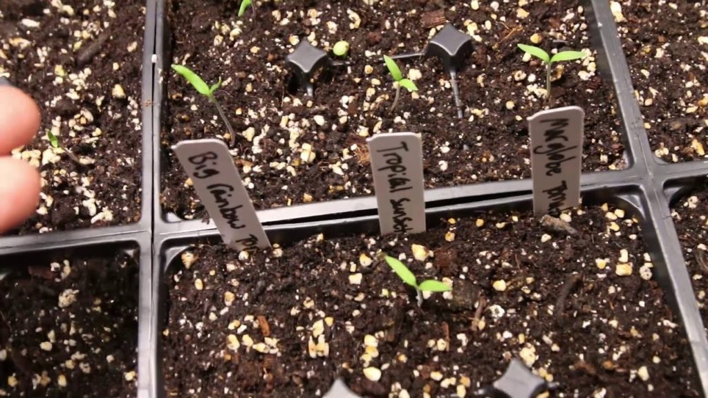 How to Thin Seedlings With Confidence!