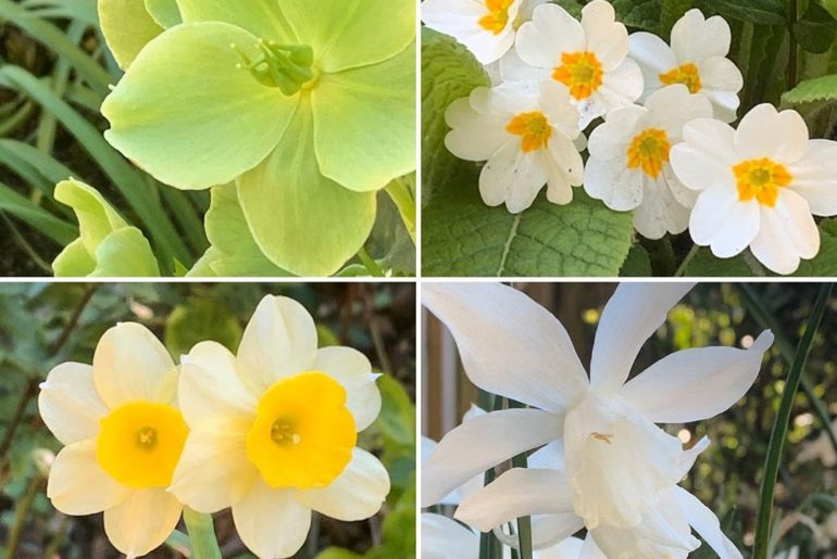 Just a bit of yellow & white. Simple pleasures spring #gardendesign #helleborus ...